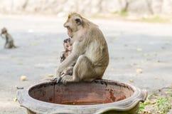 Tierverhalten lizenzfreies stockfoto