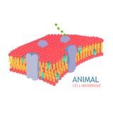 Tierzellanatomie Stockfotos