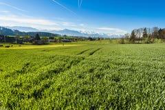 Tierzucht in der Schweiz Lizenzfreies Stockfoto