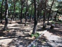 TIFLIS, GEORGIA 17. MAI 2018: Stadtpark am Frühlingstag in Tiflis, Georgia Lizenzfreies Stockbild