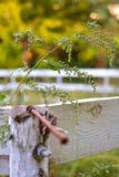 Tige d'herbe avec la toile d'araignée Photos stock