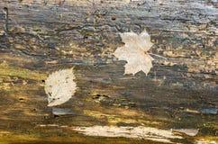 Tige d'un vieil arbre avec des feuilles Photographie stock