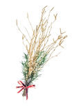 Tige de bouleau de Noël Photo libre de droits