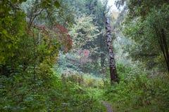 Tige de bouleau en égalisant la lumière le long du chemin à travers des bois image stock