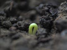 Tige de jeune plante images stock
