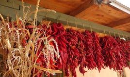 Tige de maïs et chilie rouge troubles Photos stock