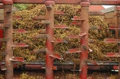 Tige de raisin de petit morceau de chariot de ferme Photos stock