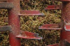 Tige de raisin de petit morceau de chariot de ferme Photographie stock
