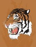 Tiger überlagerte Änderungsfarben Stockfoto