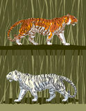 Tiger_001 Immagine Stock