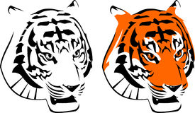 Tiger. Vector illustration of the tiger head. Orange, black and white Royalty Free Stock Photo