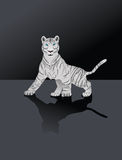 Tiger. White Bengal tiger,Vector art in Adobe illustrator EPS format Royalty Free Stock Images