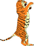 Tiger. Vector -Tiger  standing on hind legs Stock Image