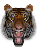 Tiger. 3D rendered tiger on white background isolated Stock Image