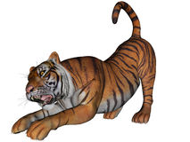 Tiger. 3D rendered tiger on white background isolated Royalty Free Stock Photos