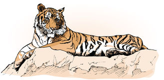 Tiger. Vector illustration of a tiger laying on a rock (hand drawing Royalty Free Stock Image