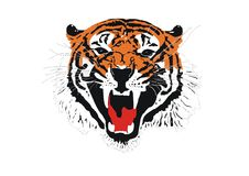Tiger. Head of a Sumatran tiger vector illustration