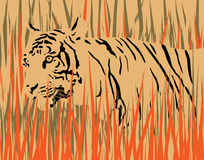 Tiger. Vector illustration of a tiger in dry grass with tiger and grass as separate elements Royalty Free Stock Photo