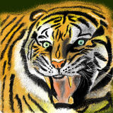 Tiger. Painting Tiger, tiger head, howling Tigers Royalty Free Stock Photo