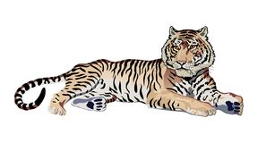 tiger vektor illustrationer