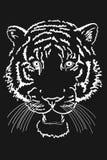 Tiger Stock Photos