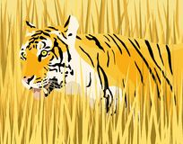 Tiger. Vector illustration of a tiger in dry grass with tiger and grass as separate elements Stock Image