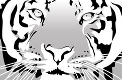 Tiger. Abstract vector illustration of a tiger Royalty Free Stock Photos