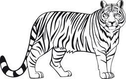 Tiger. Illustration of a tiger in vectoring style Stock Images