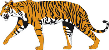 Tiger. Illustration of a tiger in  style Stock Photography
