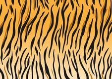 Tiger. Vector tiger black and orange stripped tiger design Stock Photography