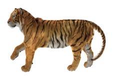 Tiger Lizenzfreies Stockfoto