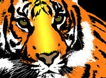 The Tiger. Royalty Free Stock Images