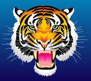 Tiger. Vector illustration of head of tiger Stock Photography