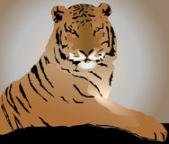 Tiger. Vector illustration of a wild tiger Stock Image