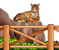 A tiger above the cliff. Illustration of a tiger above the cliff on a white background Stock Image