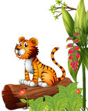 A tiger above a trunk. Illustration of a tiger above a trunk on a white background Stock Image