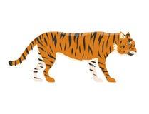 Tiger action wildlife animal danger mammal fur wild bengal wildcat character vector illustration Royalty Free Stock Images