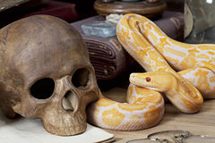 Tiger Albino Python Royalty Free Stock Images