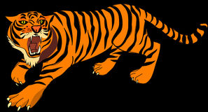 Tiger, Angry, Defense, Stripes Royalty Free Stock Photography