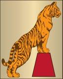 Tiger Animal Photographie stock