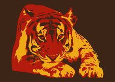 TIGER ANIMAL POSTER. Color  image of a tiger predatory animal Royalty Free Stock Image