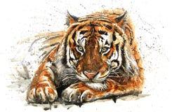 Tiger. Animals watercolor, wild cat, predator in wildlife, Bengal , design of t-shirt royalty free illustration