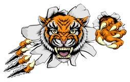 Tiger Attack Concept Imagen de archivo libre de regalías