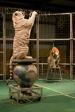 Tiger auf Plattformen, eine Stellung Lizenzfreies Stockfoto