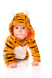 Tiger baby Stock Photos