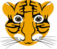 Tiger baby head Royalty Free Stock Images