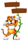 A tiger at the back of a two-plank empty board Stock Photography