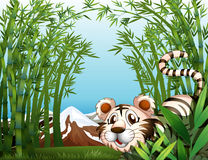 A tiger in a bamboo forest Stock Images