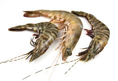 Tiger and Banana Prawns Royalty Free Stock Images