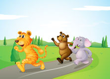 A tiger, a bear and an elephant running along the road Royalty Free Stock Images